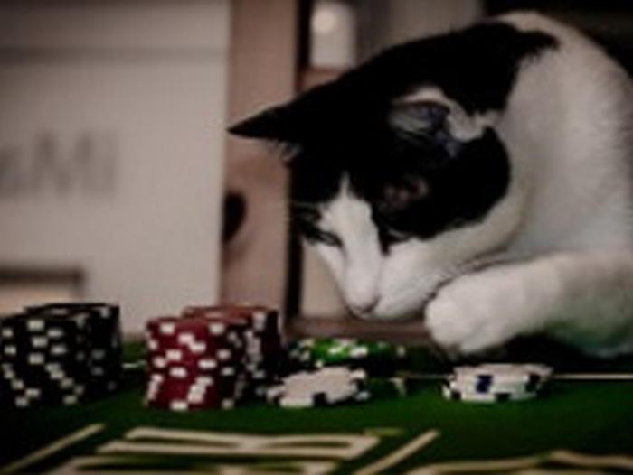 Bästa spelsidan katt - casino och odds